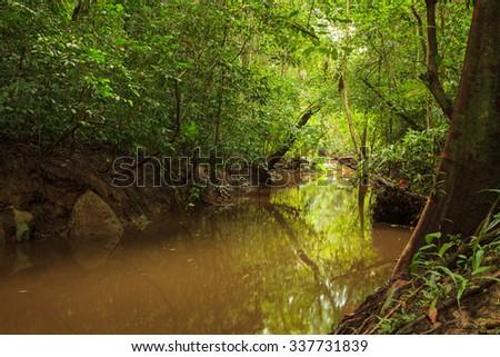 Small muddy jungle river in borneo - stock photo