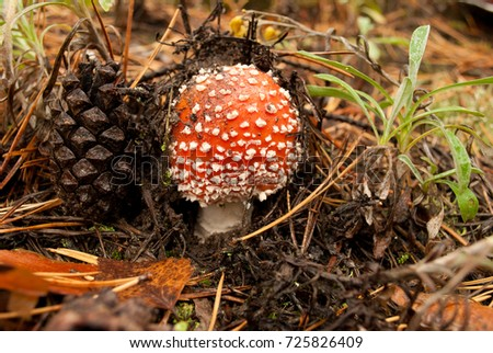 small mushroom and pine cone