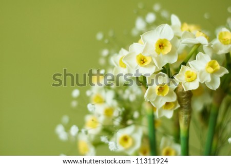small narcissuses on green - stock photo
