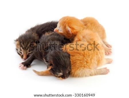 small newborn kittens, red and black - stock photo