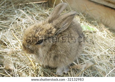 small nice gray rabbit on hay
