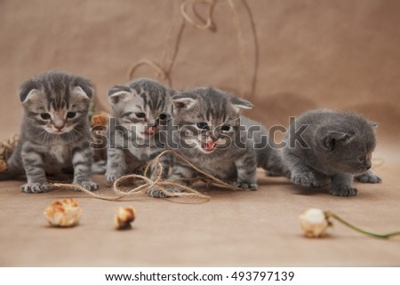 Small nice kittens in decoration