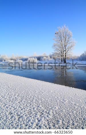 small oak near winter river - stock photo