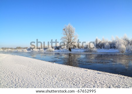 small oak on coast river - stock photo