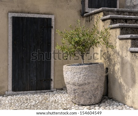 Small olive tree in stone pot front of the door. - stock photo