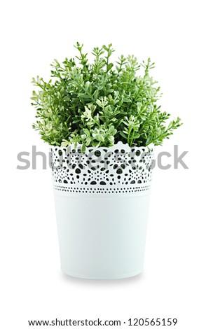 Small ornamental plant in stencil white pot - stock photo