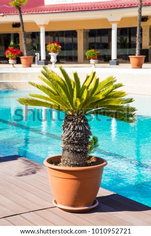 Small Palm Tree Vase Decoration Outside Stock Photo Royalty Free