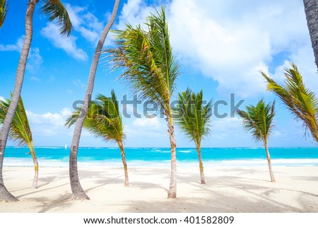 Small palm trees grow on empty sandy beach. Coast of Atlantic ocean, Dominican republic, Punta Cana resort