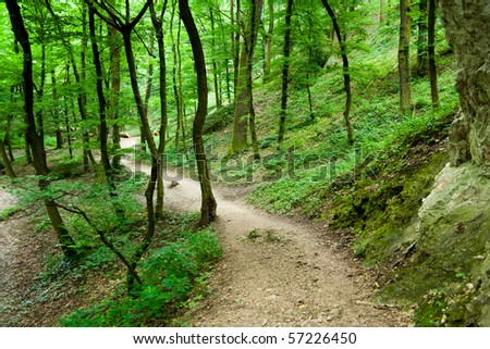 small path in a green forest in spring - stock photo