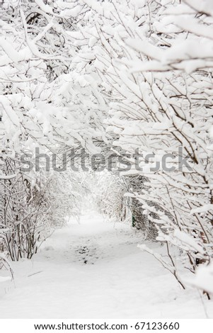 Small path under trees fully covered by snow in winter day - stock photo