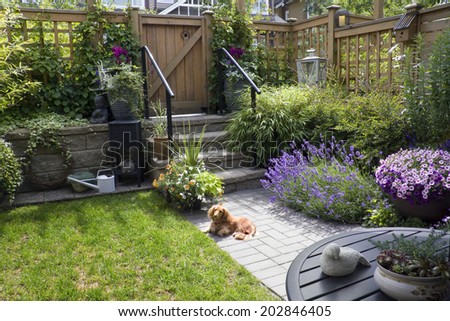 Small patio garden with a dachshund dog lying in the sun.  - stock photo