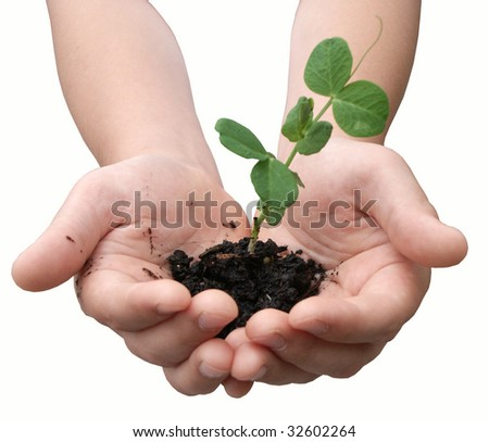 Small pea plant in child's hands - stock photo