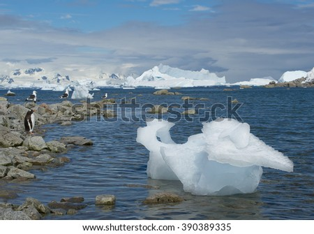 Small piece of iceberg, floating in blue sea, with penguin and gulls, snowy mountains in the background, Antarctic Peninsula - stock photo