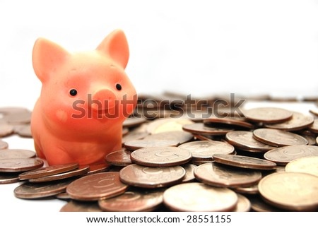 small pig sits on coins