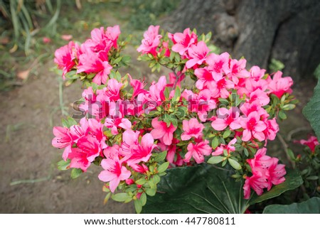 Small pink flowers background  - stock photo