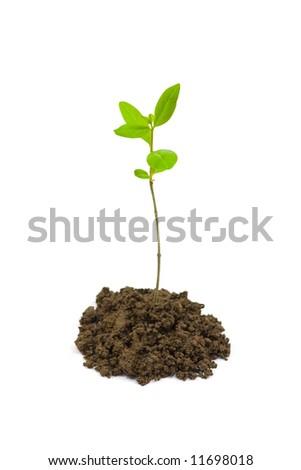 small plant - stock photo
