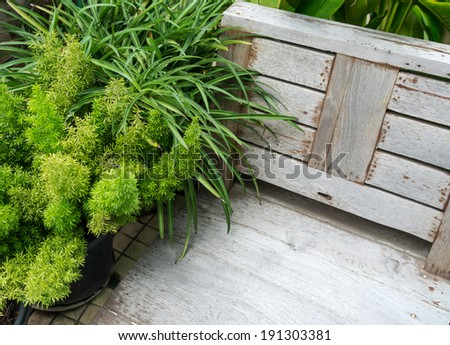 small plant and wood chair
