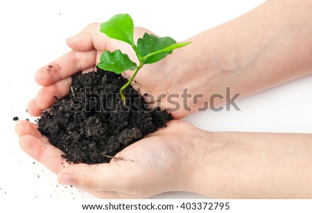 small plant cupped in child's hands - stock photo