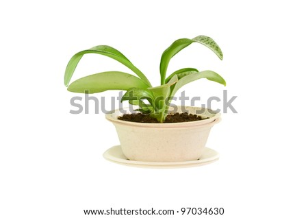 small plant in bagasse bowl - stock photo