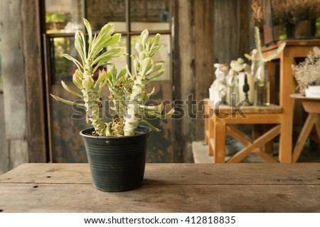 Small plant in flower pot on wooden table and garden background in warm tone/Small plant in flower pot in warm tone - stock photo