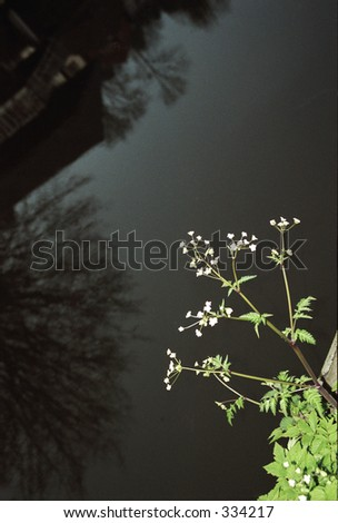 small plant in front of reflection in water - stock photo