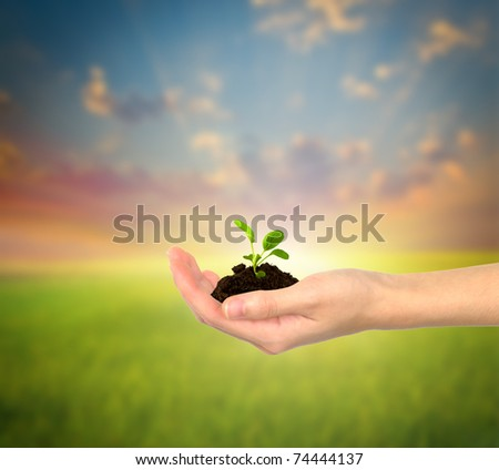 small plant in hand - stock photo