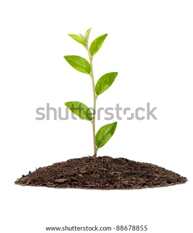 Small plant in pile of soil - stock photo
