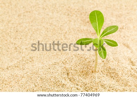 small plant in sand - stock photo