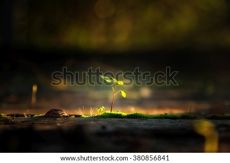 Small plant in the sunlight - stock photo