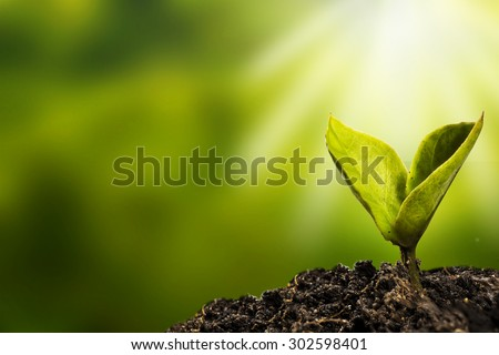 small plant is growing represent to hope, start or life - stock photo