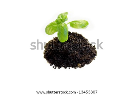 small plant isolated on white