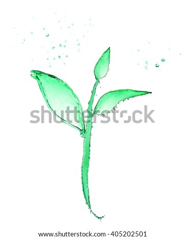 Small plant made of water splashes isolated on white - stock photo