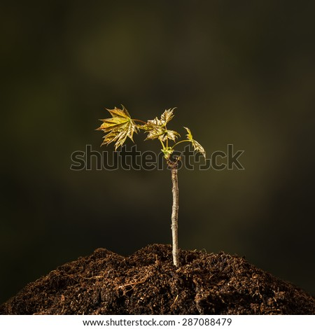 Small plant on a pile of soil on green bokeh background - stock photo
