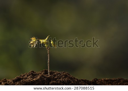 Small plant on a pile of soil on green bokeh background