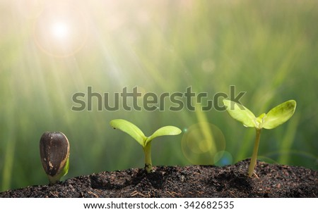 Small plant on pile of soil - Grow concept - stock photo
