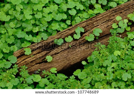 Small plant on the wood - stock photo