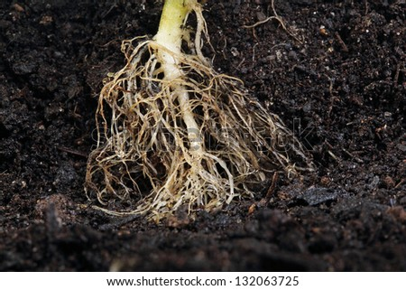 small plant root in soil