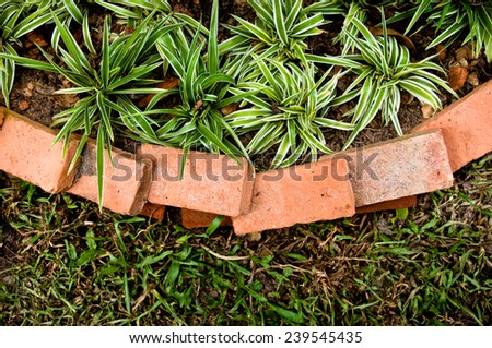 Small Plant Tree with Old Vintage Brick Wall with Green grass outside / Idea of Garden, Top View. - stock photo
