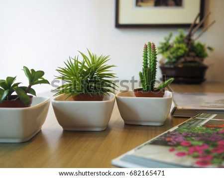 Small Plants Background, Small Plants Decorate, Plants For Decorate On The  Table With Books