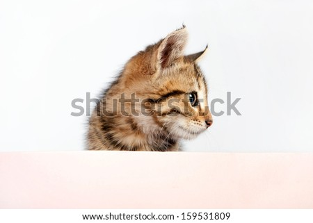 Small playful kitten peeking out of a blank sign, isolated - stock photo