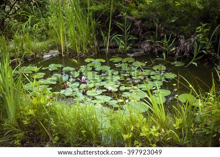 Small pond as part of landscaping with aquatic plants and water lilies surrounded by lush vegetation - stock photo