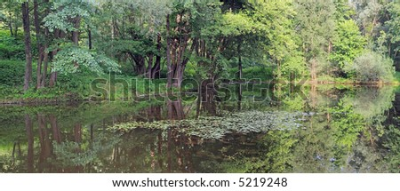 Small pond in summer green forest (water surface with reflection and water plants)