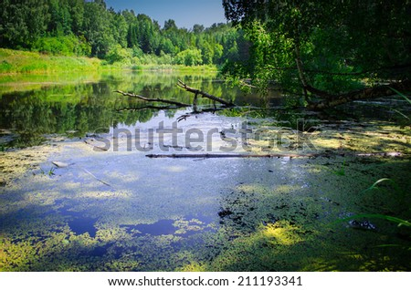 small pond in the woods - stock photo