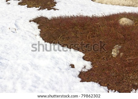 Small portion of a blueberry field in Down East Maine with melting snow in the spring. - stock photo