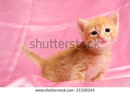Small pretty kitten, on pink background