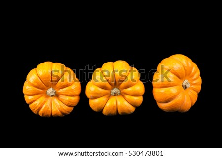 Small pumpkin on a black background