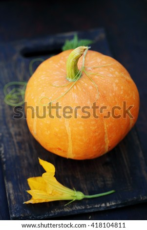 Small pumpkin on a wooden table. Still - stock photo