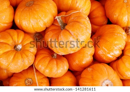 Small pumpkins - stock photo