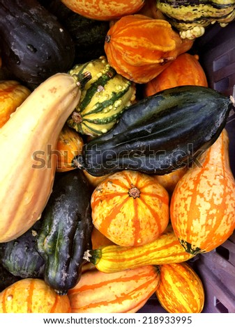 Small pumpkins and gourds for sale.