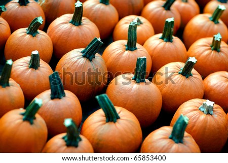 Small pumpkins for sale by a street vendor at a farmers market. - stock photo